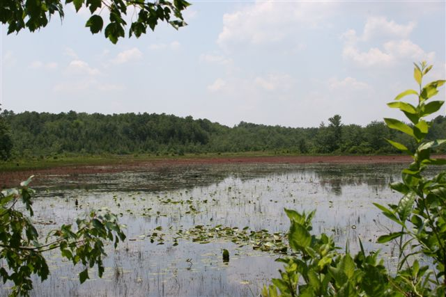 View Of The Main Pond From The Base